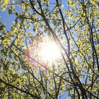 soleil branches 200x200